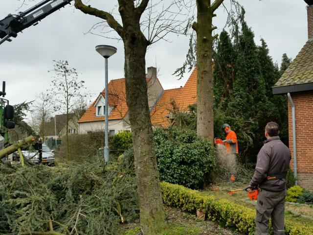 Boom Omzagen met Hijswerk Tom van den Heuvel te Venlo