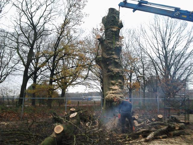 Boom Verwijderen Tom van den Heuvel te Venlo 4