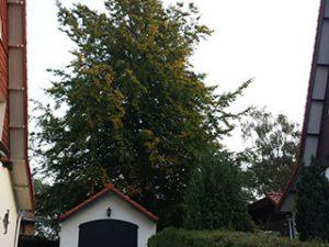 Tom van den Heuvel Venlo - boom snoeien