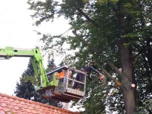 boom snoeien Tom van den Heuvel Venlo 03