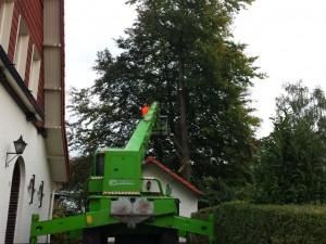 boom snoeien - Tom van den Heuvel Venlo