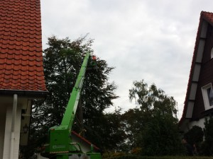 boom snoeien - Tom van den Heuvel Venlo 05